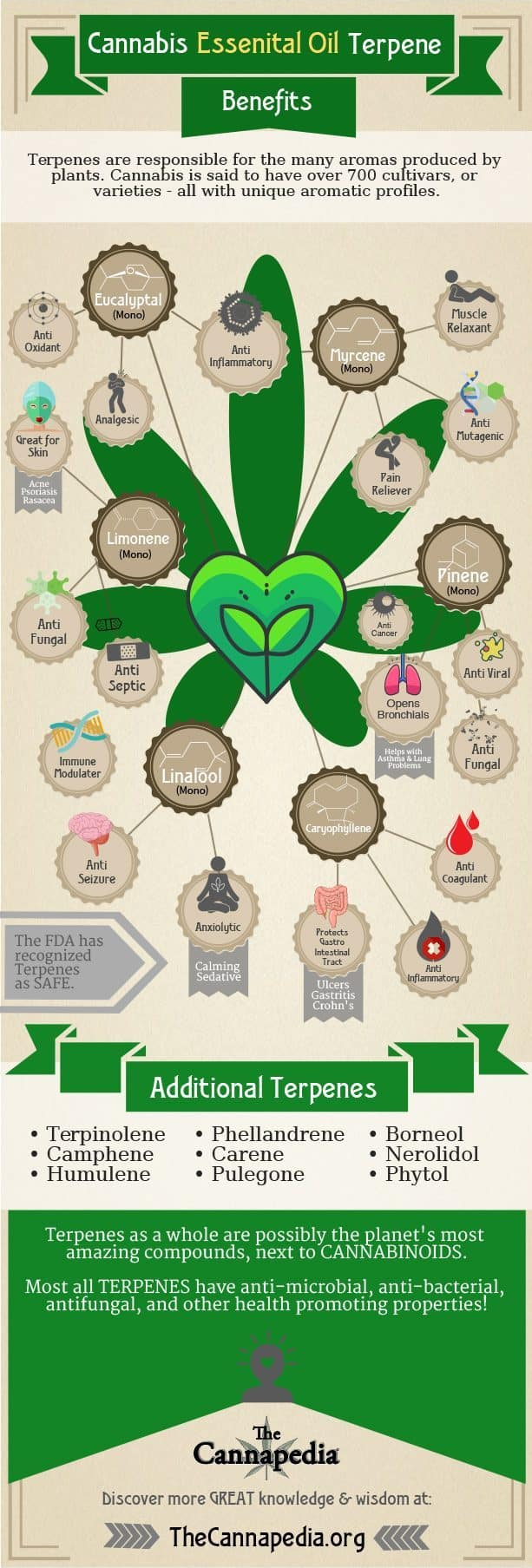 Cannabis Essential Oil Terpenes Infographic