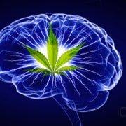 Marijuana inside your Brain