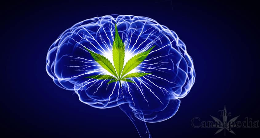 Marijuana inside your Brain